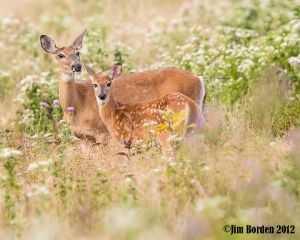 Curious Doe and Fawn