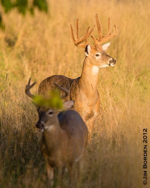 Sunset Bucks