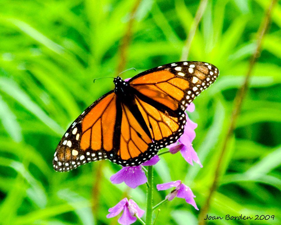 Butterfly_1.jpg