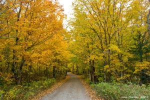 Autumn Road in North Maine Woods