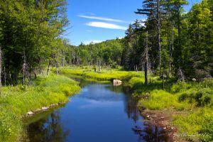 Adirondack Meadow