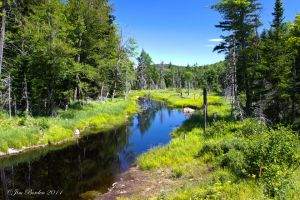 Adirondack Meadow 2