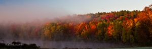 Fall Colors with Foggy Mist