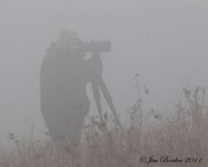 Foggy Day Deer Photography